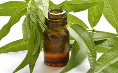 aceite-esencial-de-citronela
