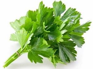cilantro hojas