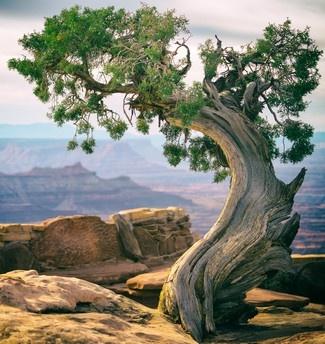 Enerbo árbol